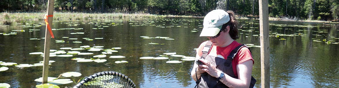 Blanding's turtle monitoring, QC (Photo by NCC)