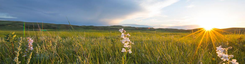 Grasslands in southern Saskatchewan (Photo by Jason Bantle)