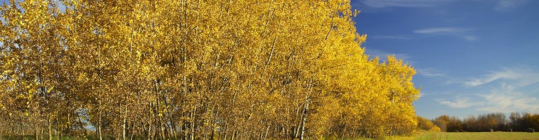 Horseshoe Lake 02 Property, SK (Photo by Branimir Gjetvaj, http://branimirphoto.ca/)