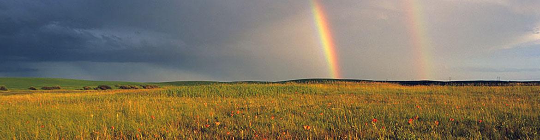 Saskatoon prairie, Saskatchewan (Photo by Dr. Branimir Gjetvaj)