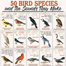 Partial graphic of 50 bird species and the sounds they make (Courtesy of AAA State of Play)