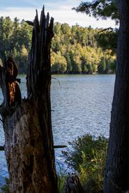 Trees at Fishing Lake, ON (Photo by Nick Tardif)
