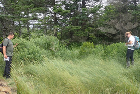 Eastern baccharis, Lobster Bay, NS (Photo by NCC)