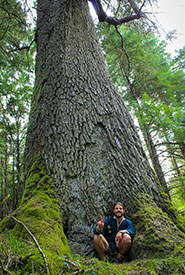 A picture of me next to an ancient Sitka Spruce, common in old-growth coastal-temperate rainforests throughout Haida Gwaii and BC's west coast. (Photo by Janel Saydam)