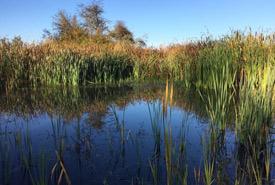 Beautiful wetland — built in the fall of 2012. (Photo by Ren Ferguson)