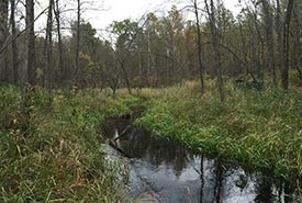 Black ash swamp along creek, Northwest Angle Provincial Forest, Manitoba (Photo by NCC)