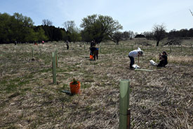 Conservation Volunteers planting trees at Minesing Wetlands, ON (Photo by Robert Britton)