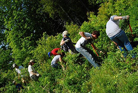 Conservation Volunteers removing invasive species at Shampers Bluff Nature Reserve, NB (Photo by NCC)