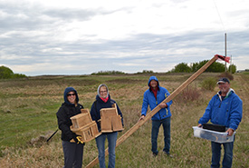 All hands on deck to install nest boxes for the eastern bluebird's western cousin, the mountain bluebird at the Edenwold property, SK. (Photo by NCC)