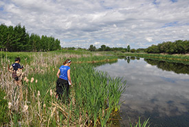 Volunteers search the wetland shoreline for amphibians. (Photo by Melanie Rathburn)