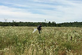 NCC staff with a butterfly net at the Carden Alvar butterfly count (Photo by NCC)
