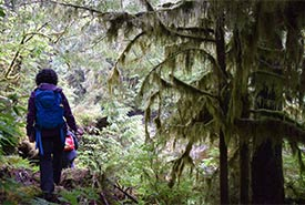 Walking through a BC forest dripping with witch's hair lichen (Photo by NCC)
