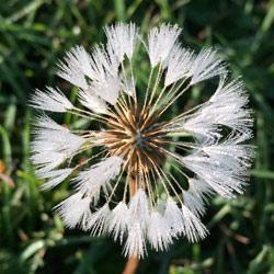 Dew and seed head art (Photo by Ren Ferguson)