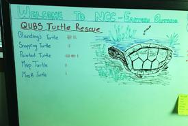 Eastern Ontario's turtle tally (Photo by Megan Quinn/NCC staff)