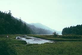 Estuary at Goldstream Provincial Park (Photo by Paul Jarvis on Unsplash)