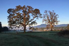 First light on the Garry oaks. (Photo by Ren Ferguson)
