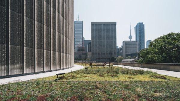 Green roof at Toronto City Hall (Photo by Scott Webb via Unsplash)