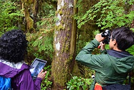 Getting a close up of the old-growth forest at the Gullchucks Estuary conservation area (Photo by NCC)