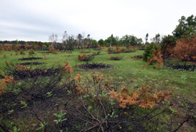 Part of the prescribed burn area at Hazel Bird Nature Reserve (Photo by Robert Britton)