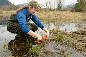A high school student in a wetland, learning to identify egg masses of amphibian species in the Fraser Valley. (Photo by Isabelle Groc)