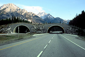 Trans-Canada Highway in Alberta, Canada, in the Banff National Park, between Banff and Lake Louise. (Photo by Qyd via Wikimedia Commons)