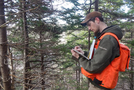 Josh Noseworthy conducting field work during his 2008 internship (Photo courtesy of Josh Noseworthy)