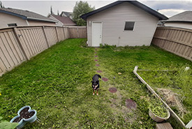 My dog, Kahlua, in her new backyard (Photo by Carys Richards/NCC staff)