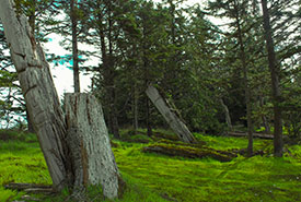 The K'uuna Llnagaay (Skedans) village site and monumental poles, a Haida Heritage Site I visited with Haida Style Expeditions. (Photo by Janel Saydam)