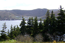 Maddox Cove, NL (Photo by NCC)