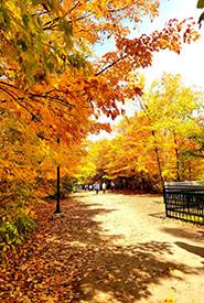 Maple trees (Photo by Kayla Burak/NCC staff)