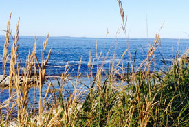 Native grasses and ocean view at Prospect, NS (Photo by NCC)