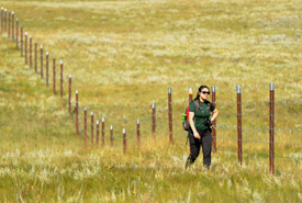 Capping fence posts with tin cans to increase visibility for sage grouse at Old Man on His Back, SK (Photo by Mark Taylor)
