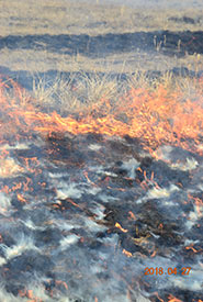 Fire removes plant material above the ground from an area. (Photo by NCC)