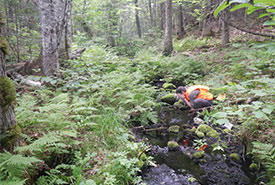 Pat Nussey cooling off at an old-growth forest. (Photo by NCC)
