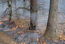 Prescribed burns on the Hazel Bird Nature Reserve are being used to restore native oak savannah and tall grass prairie. (Photo by NCC)