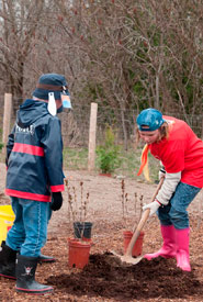 Scouts planting trees (Photo from Scouts Canada)