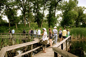 Soundwalk in Miller Woods, Indiana Dunes National Lakeshore, July 2010. (Photo by Noé Cuéllar)