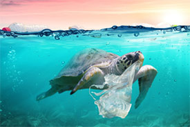 A turtle swimming with plastic (Photo by Unsplash)