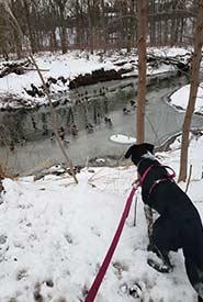 Winona amused by mallard ducks during a winter hike. (Photo by Samantha Cava)