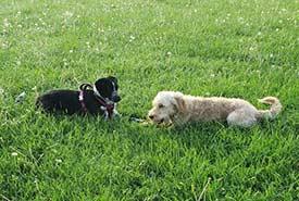 Winona enjoying some off-leash time at a dog park. (Photo by Samantha Cava)