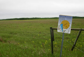 It was cool and rainy when I got to the NCC's Yellow Quill Prairie Preserve (Photo by Diana Bizecki Robson)