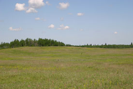The Yellow Quill Prairie Preserve on a sunny day (Photo by Diana Bizecki Robson)
