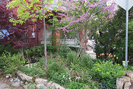 Front yard naturalization in spring. (Photo by Lorraine Johnson)