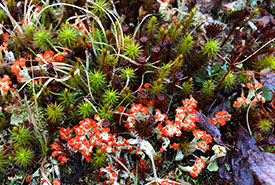 Lichens are like tiny pockets of the universe. You need to really look to appreciate them. (Photo by Doug van Hemessen/NCC staff)