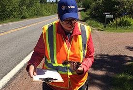 Documenting roadkill helps me investigate the interactions between wildlife and roads in the Chignecto Isthmus (Photo by NCC)