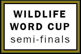 Wildlife World Cup semi finals (made by NCC)