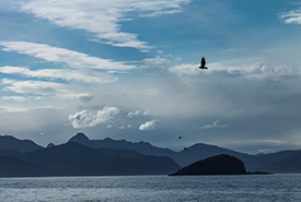 Bald eagles fishing for herring with the mountains of Gwaii Haanas in the background. This picture captures how this area is protected from the bottom of the ocean to the tops of the mountains. (Photo by Janel Saydam)