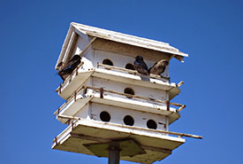 Multi-suite bird house on Pelee Island, ON (Photo by Wendy Ho/NCC staff)