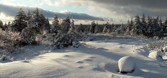 Blue Mountain, NS (Photo by Doug van Hemessen/NCC staff)