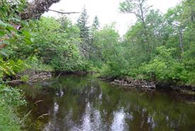 Boggy River in the summer (Photo by NCC)